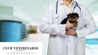 ¡Cuida de tu mejor amigo! Vacunas + desparasitación interna.