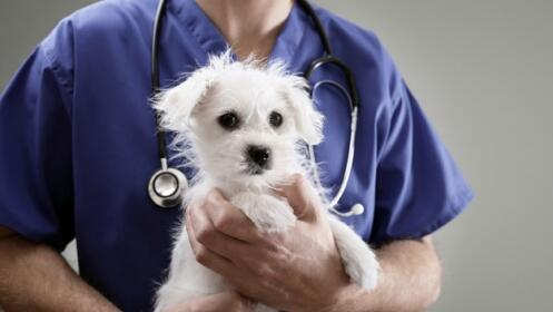 Sesión de belleza canina con vacuna de la rabia